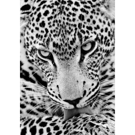 Kit Diamond Painting - Leopardo - Collection d Art