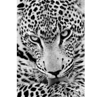 Kit Diamond Painting - Leopardo - Collection d'Art